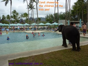 See Candi the elephant at Ourtigger Laguna Beach Resort